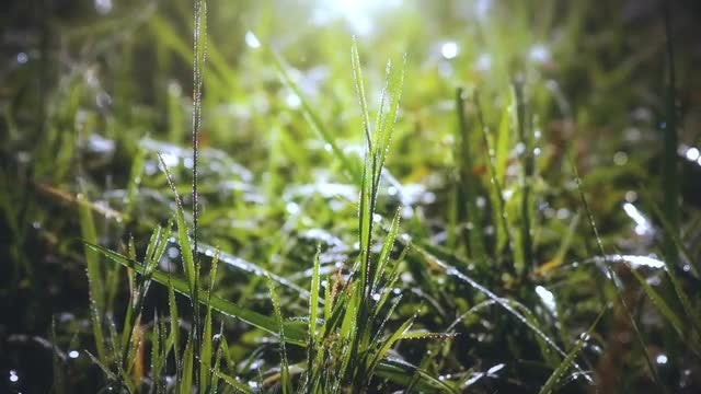 Morning Grass: Stock Video