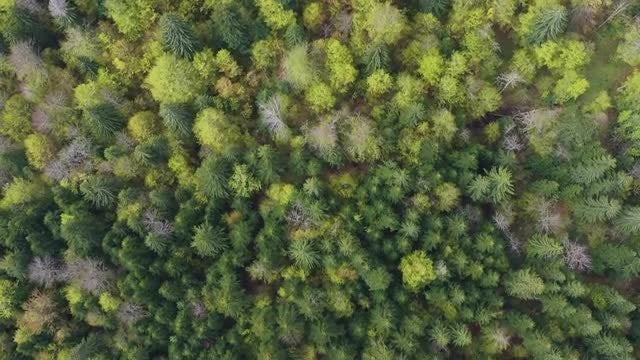 Pine Forest In Spring: Stock Video