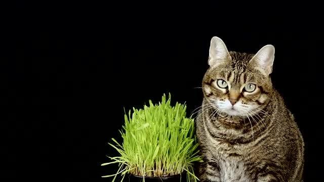 Cat Next To Grass: Stock Video