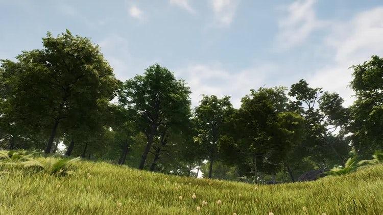 Elegant Forest: Motion Graphics