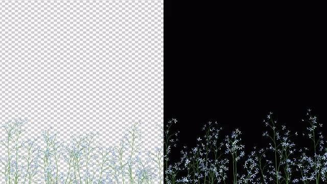 Flowering Grass VFX: Stock Motion Graphics
