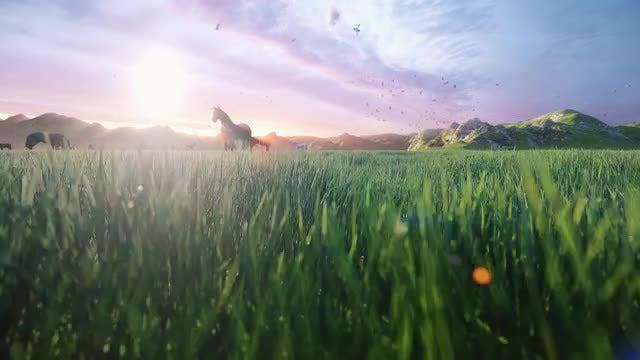 Horses Feeding During Sunrise: Stock Motion Graphics