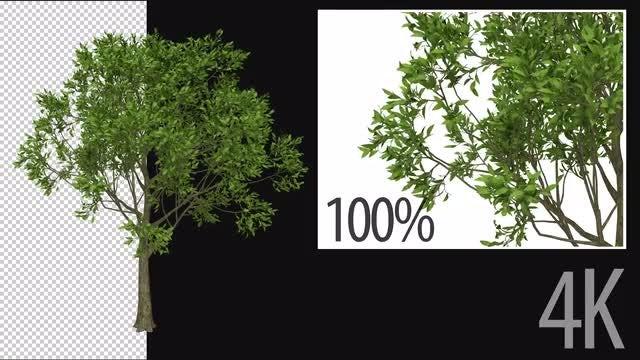 3D Apple Tree: Stock Motion Graphics