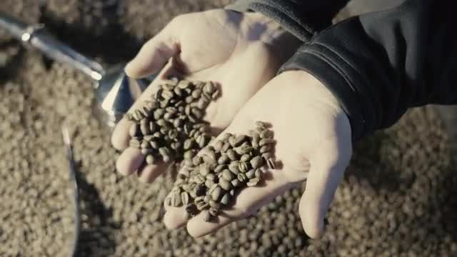 Holding Coffee Beans: Stock Video