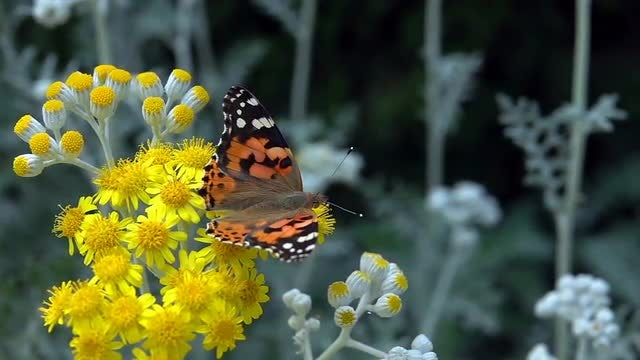 Colorful Butterfly: Stock Video