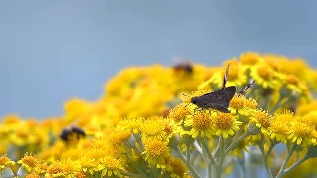Butterflies On Blooms: Stock Video