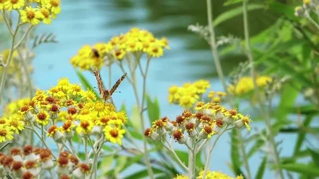 Yellow Daisies: Stock Video