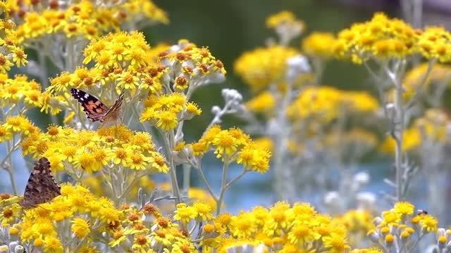 Yellow Flowers: Stock Video