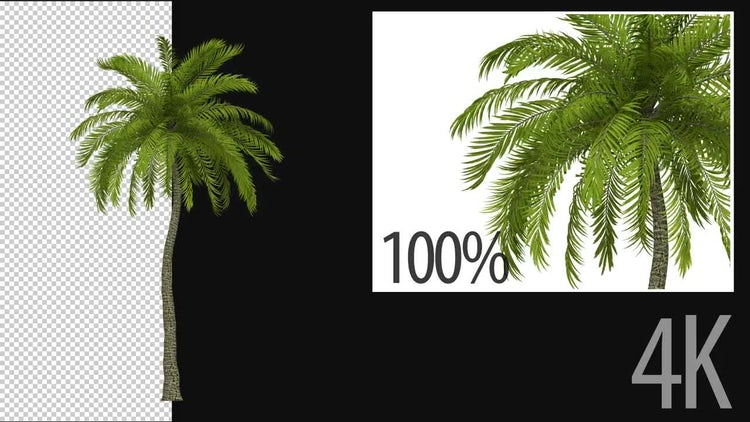 3D Beach Palm Tree: Stock Motion Graphics