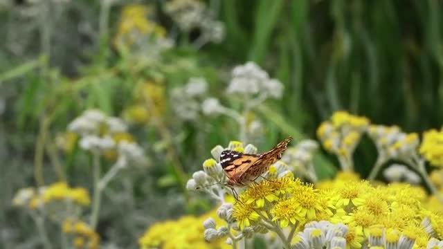 Butterfly Flies Off: Stock Video
