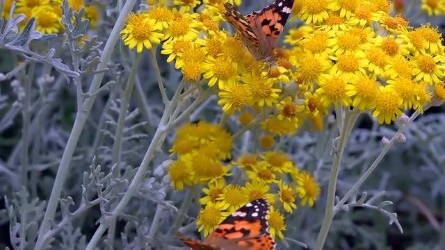 Butterflies In A Garden: Stock Video