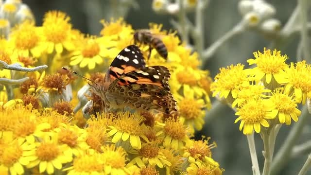 Insects On Flower: Stock Video