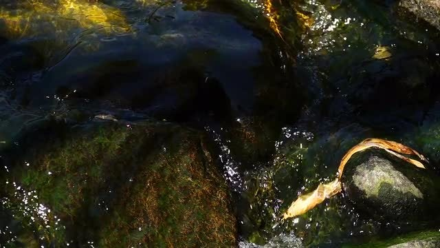 Creek With Mossy Rocks: Stock Video