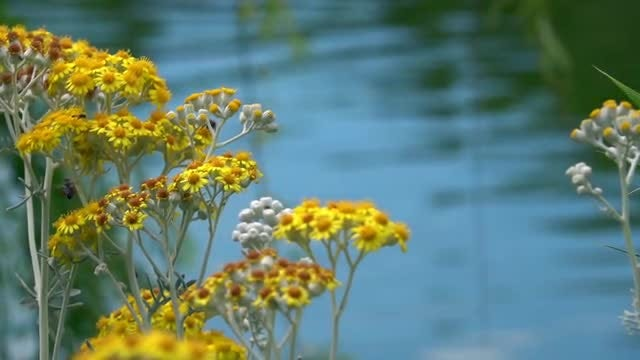Flowers On The Lake: Stock Video