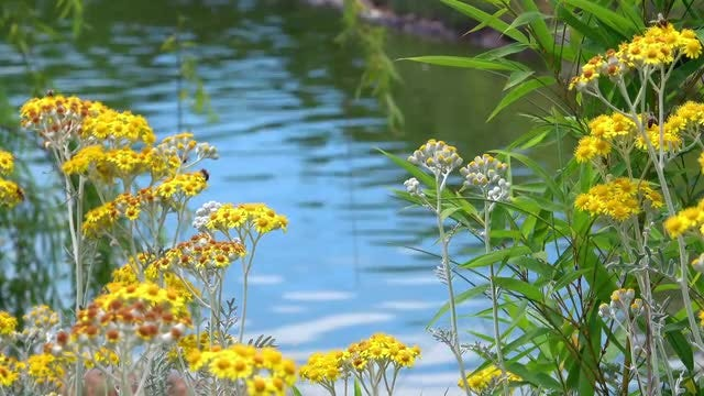 Wildflowers By Blue Lake: Stock Video