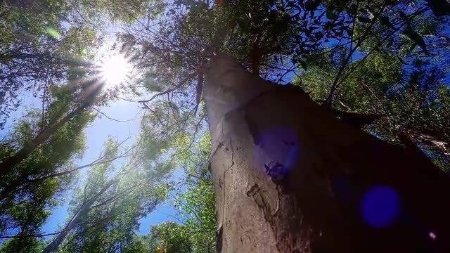Sunny Tree: Stock Video