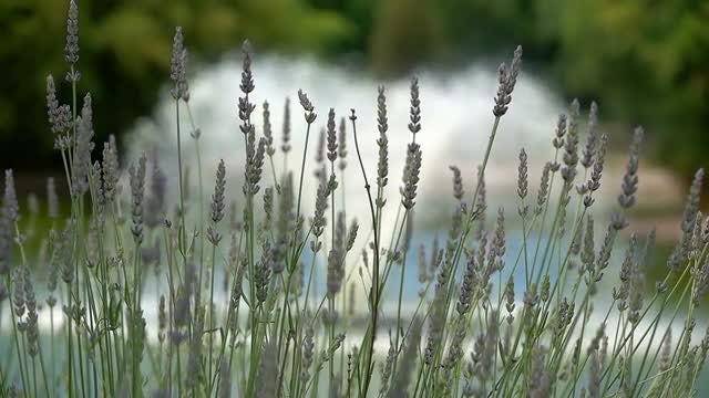 Purple Flowers: Stock Video