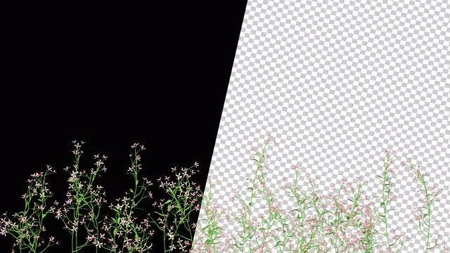 Flowering Shrub Overlay: Stock Motion Graphics