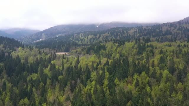 Aerial Of A Forest: Stock Video