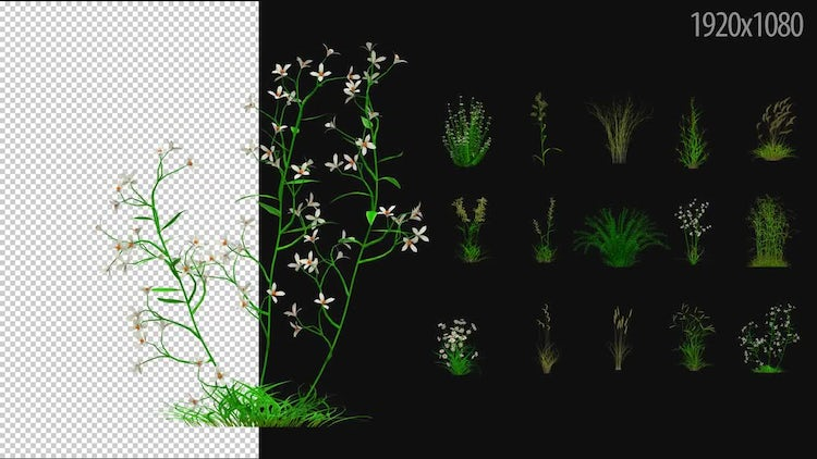 3D Flowering Plants Pack: Stock Motion Graphics