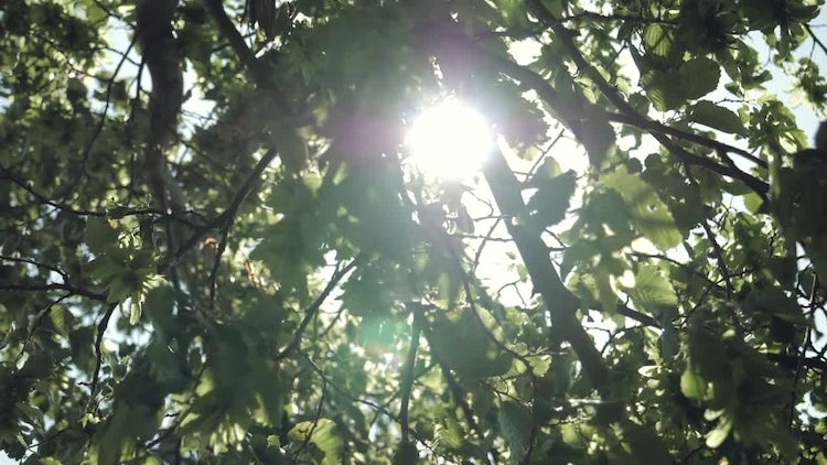 Slow Motion Sun And Leaves: Stock Video