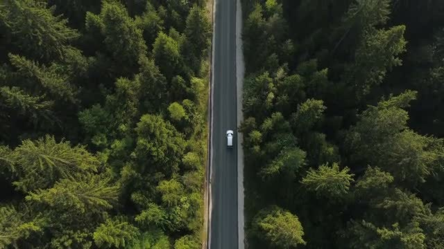 Lone Car On Forest Road: Stock Video