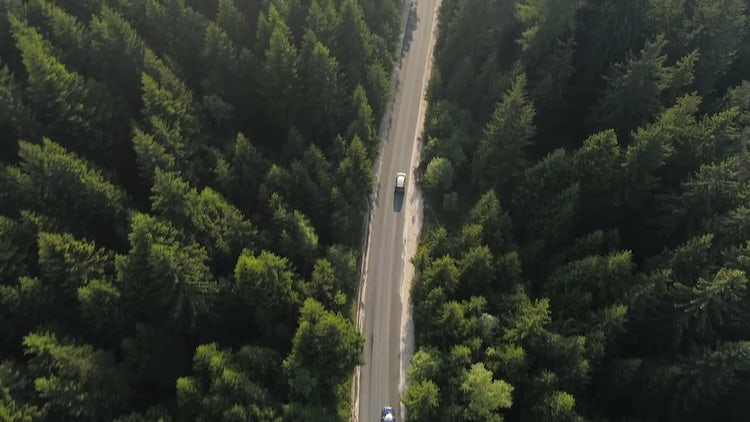 Aerial Of Forest Road: Stock Video