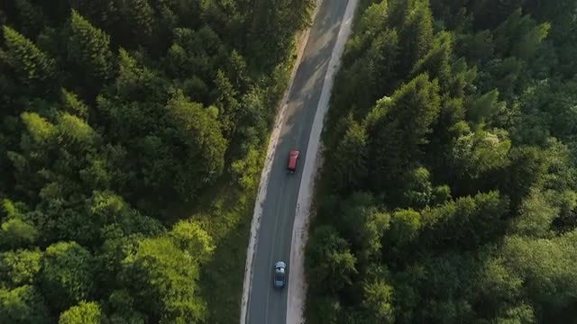 Cars On Forest Road: Stock Video