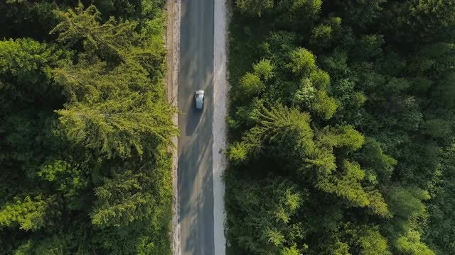Cars On Dense Forest Road: Stock Video