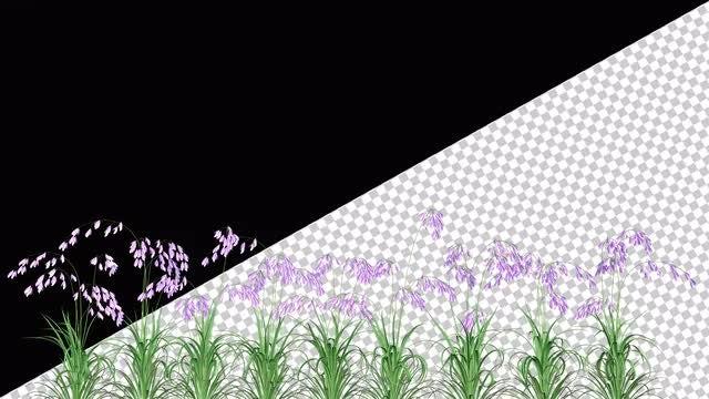 Purple Flowers: Stock Motion Graphics