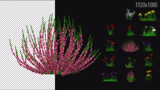 3D Flowering Plants Pack 02: Stock Motion Graphics