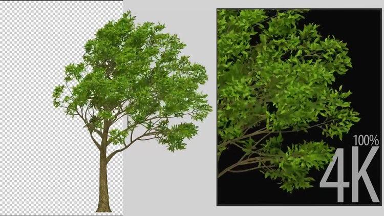 Apple Tree: Stock Motion Graphics
