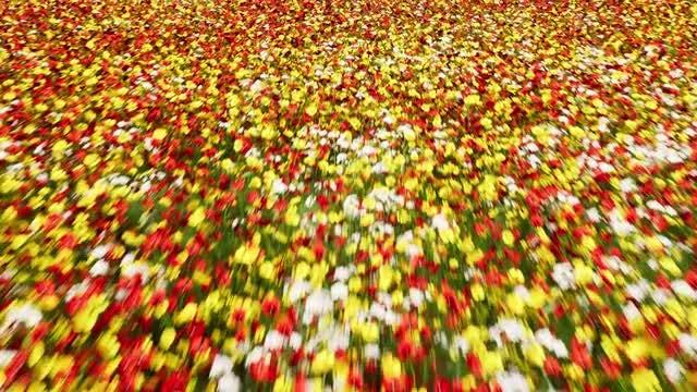 Flower Field: Stock Motion Graphics