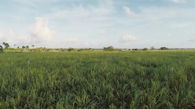 Flying Over The Fields: Stock Video