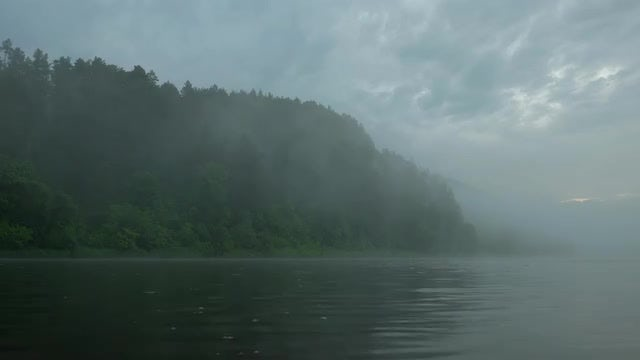 Misty Forest By Lake: Stock Video