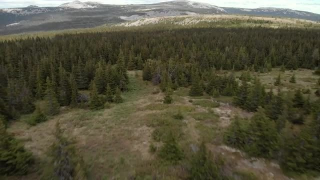 Aerial Over Forest: Stock Video