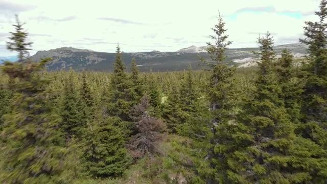 Aerial Through Forest Landscape: Stock Video