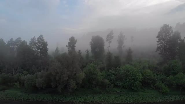 Foggy Forest: Stock Video