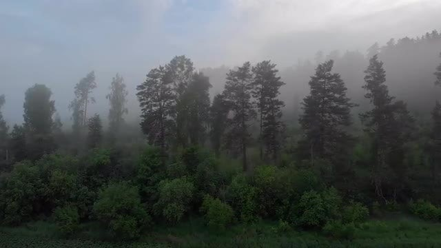 Misty Forest Aerial: Stock Video
