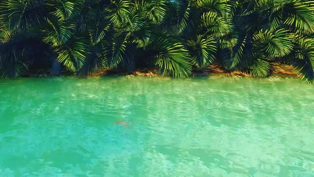 Pond In A Jungle: Stock Motion Graphics