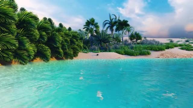 Tropical Beach: Stock Motion Graphics