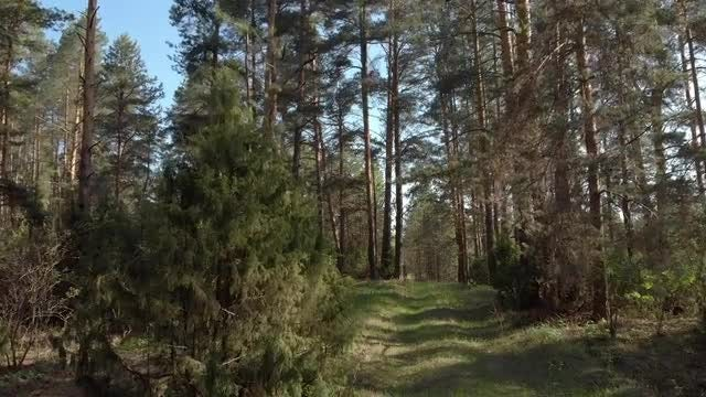 Walking Through Forest: Stock Video