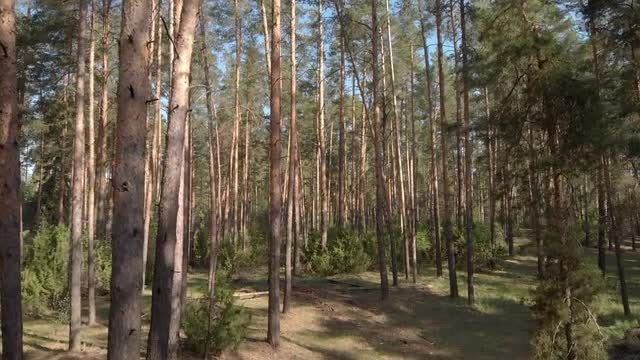 Drone Flying In Forest: Stock Video