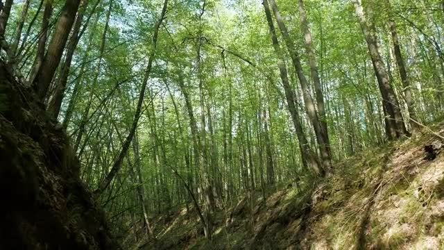 Nature Trail In Forest: Stock Video
