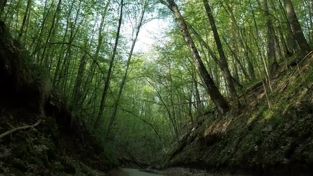 Walking Along Forest Trail: Stock Video