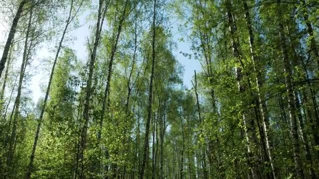 Branches Of Trees In The Forest: Stock Video