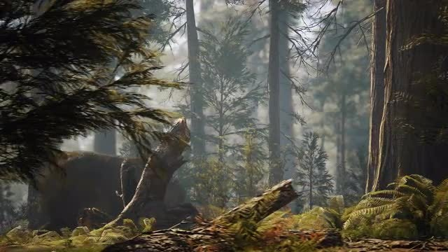 Bear In The Woods: Stock Motion Graphics