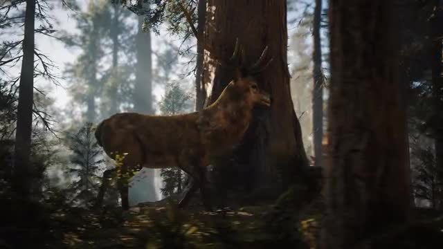 Deer In The Forest: Stock Motion Graphics