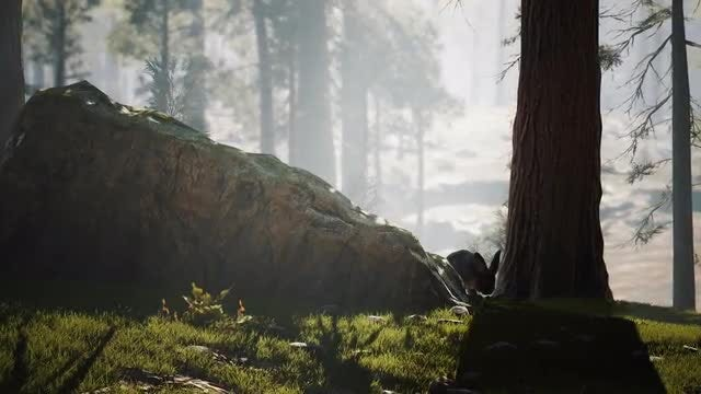 Rabbit  In The Forest: Stock Motion Graphics