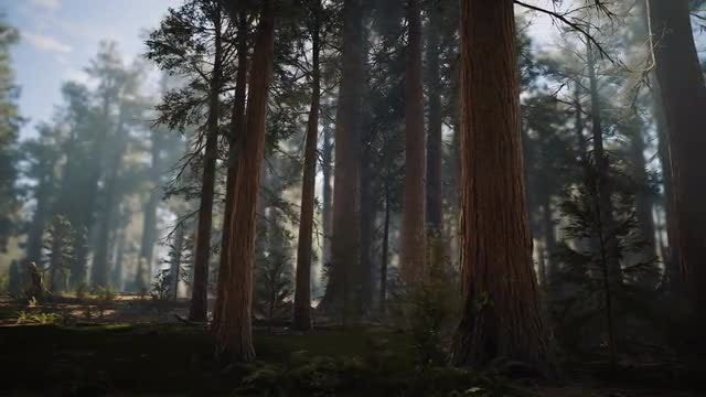 In The Woods: Stock Motion Graphics